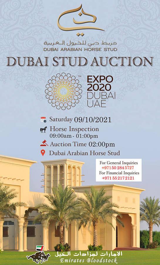 Dubai Stud Auction