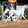 2012 AHBA Stallion Showcase