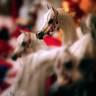 2007 Arabian Breeders World Cup Gallery
