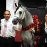 2010 Arabian Breeders World Cup Gallery
