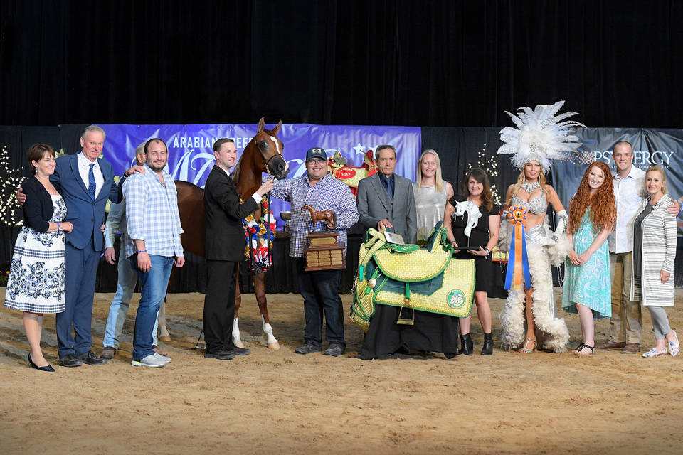 2019 Abwc Gallery The Arabian Breeders World Cup