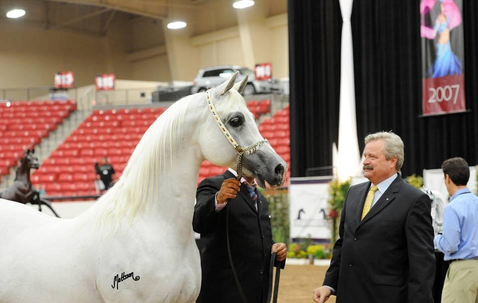 2011 Arabian Breeders World Cup Gallery