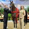 ABWC Stallion/Colt ATH Supreme Bronze Champion - Victorious LD
