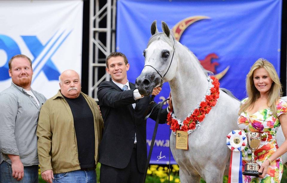 2013 Abwc Champions The Arabian Breeders World Cup