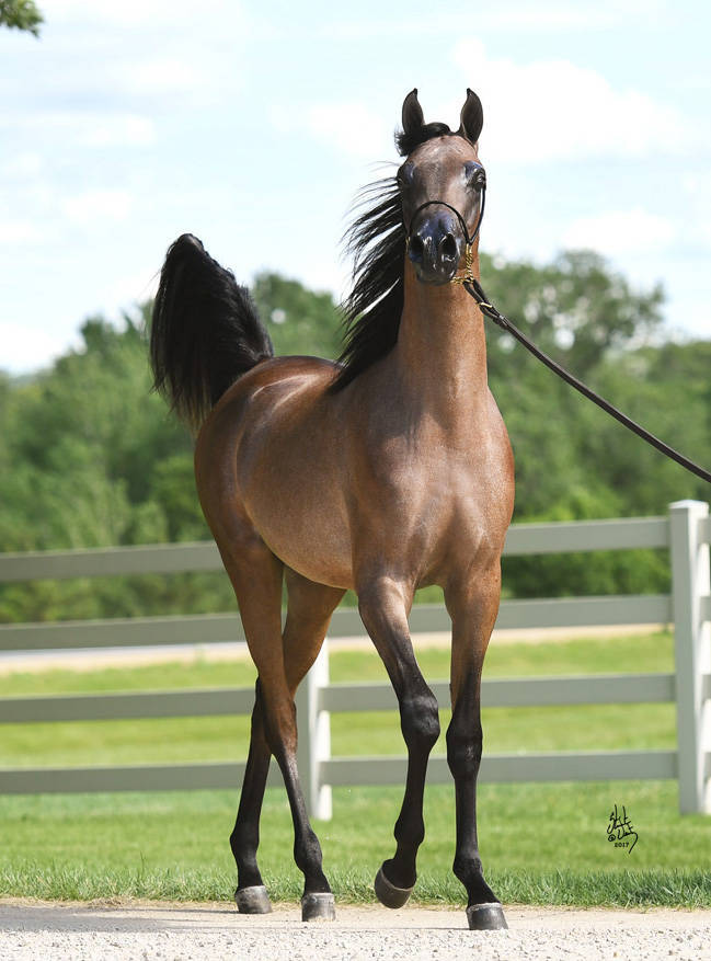 JR Savall as a yearling