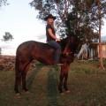 lovemyhorse