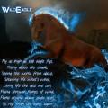 wildeagle