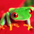 froggie27