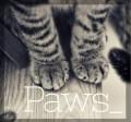 paws_