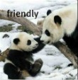 friendly