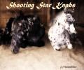 shooting star knabs