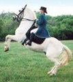 ᘛ§lipizzaner legends§ᘗ