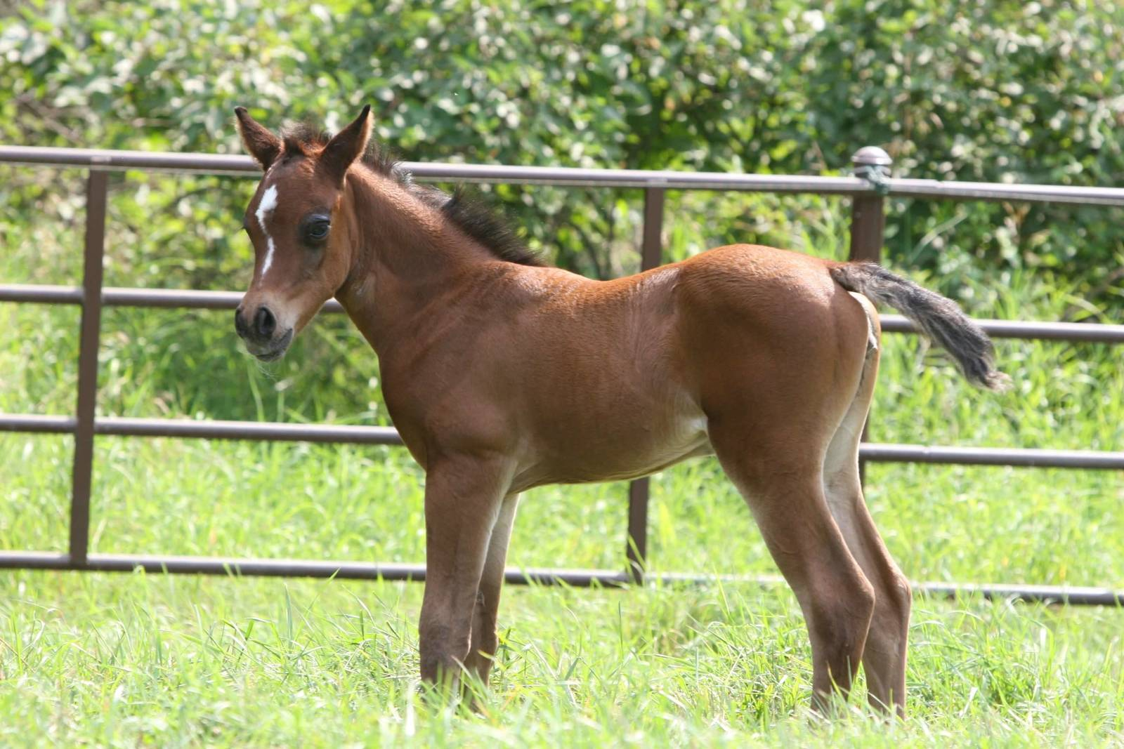 Age 1 week