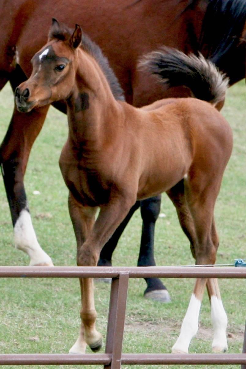 Age 6 weeks