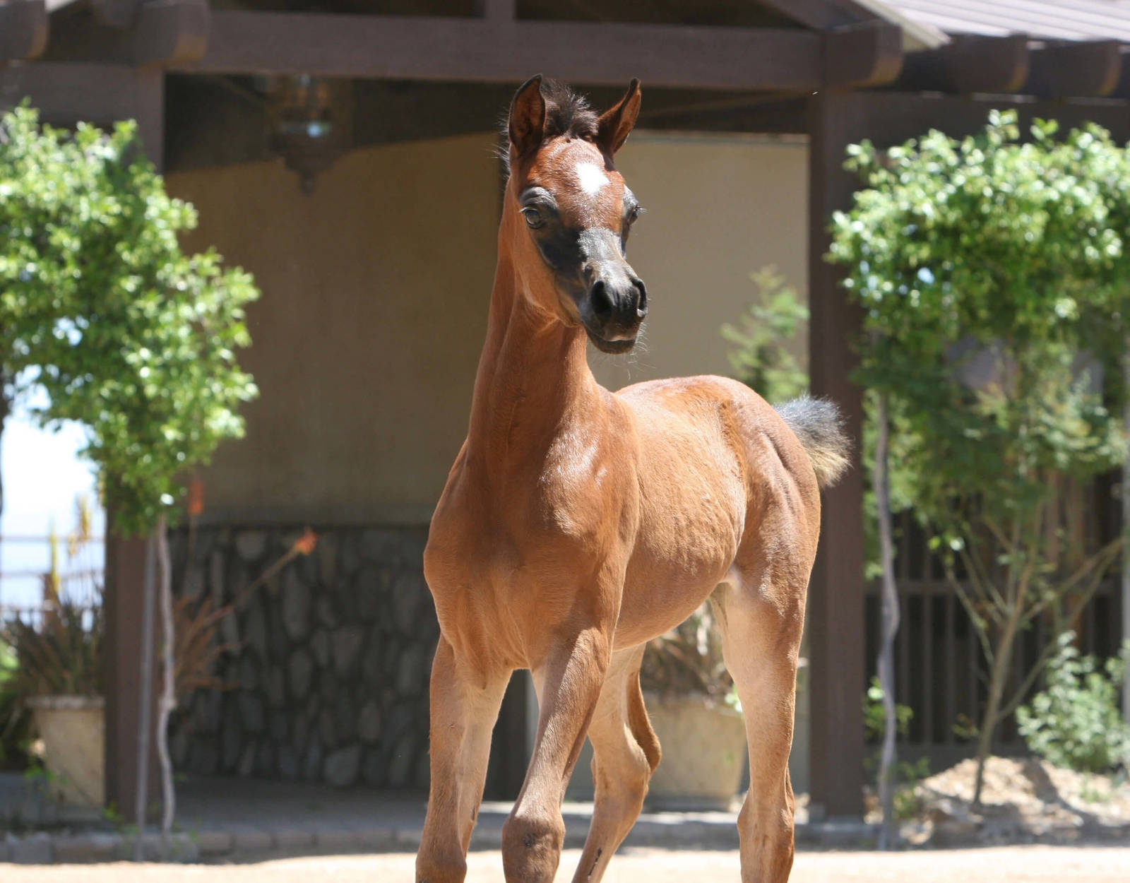 Azpin Lia - age 4 weeks
