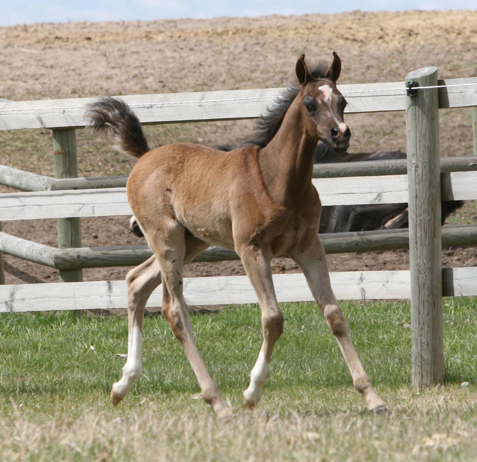 Age 4 weeks