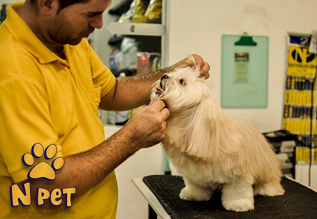 Cachorros até 10kg de R$58 por apenas R$28,90