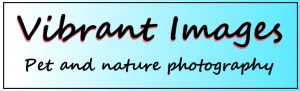 vibrant images logo 8-21-15