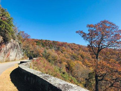 Blue Ridge Parkway Tree Curve