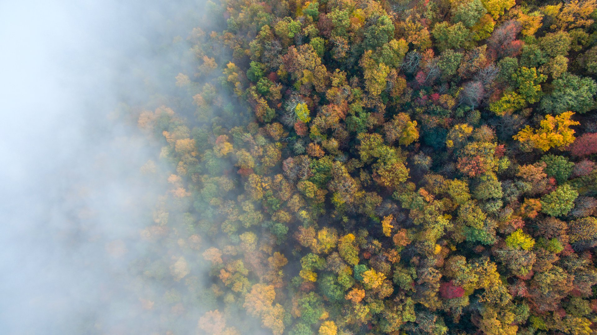 fall color in the blue ridge mountains.jpg