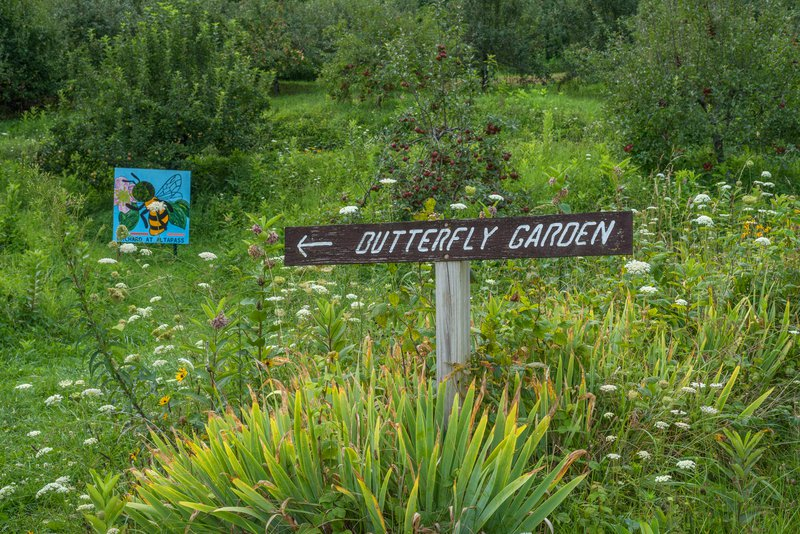 The butterfly garden at the Orchard at Altpass.