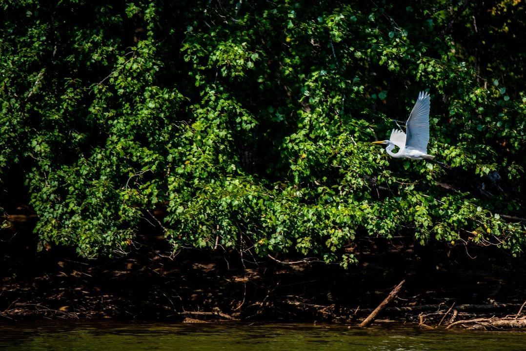Lake James Birding.jpg