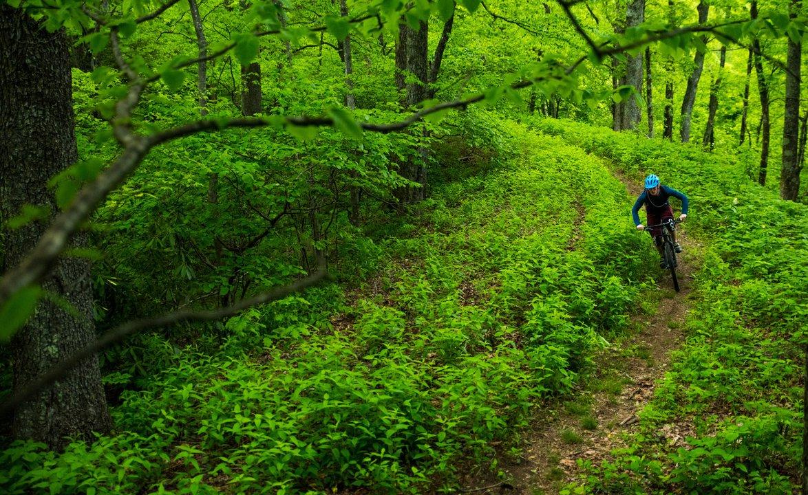 Woods Mountain Trail.jpeg