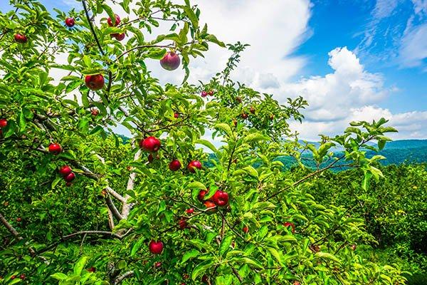 orchard altapass blue ridge traveler