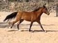 fer cavalos