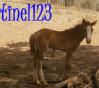 tinel123
