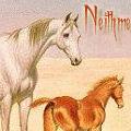 neithme