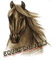 equus caballi