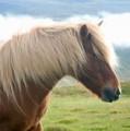 Ω islandês ranch Ω
