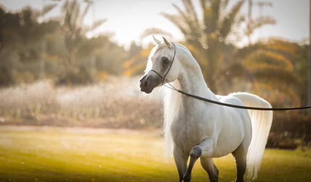 Kais Al Baydaa