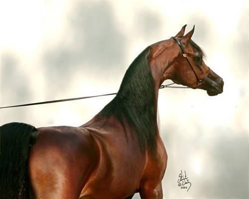 *Marwan Al Shaqab