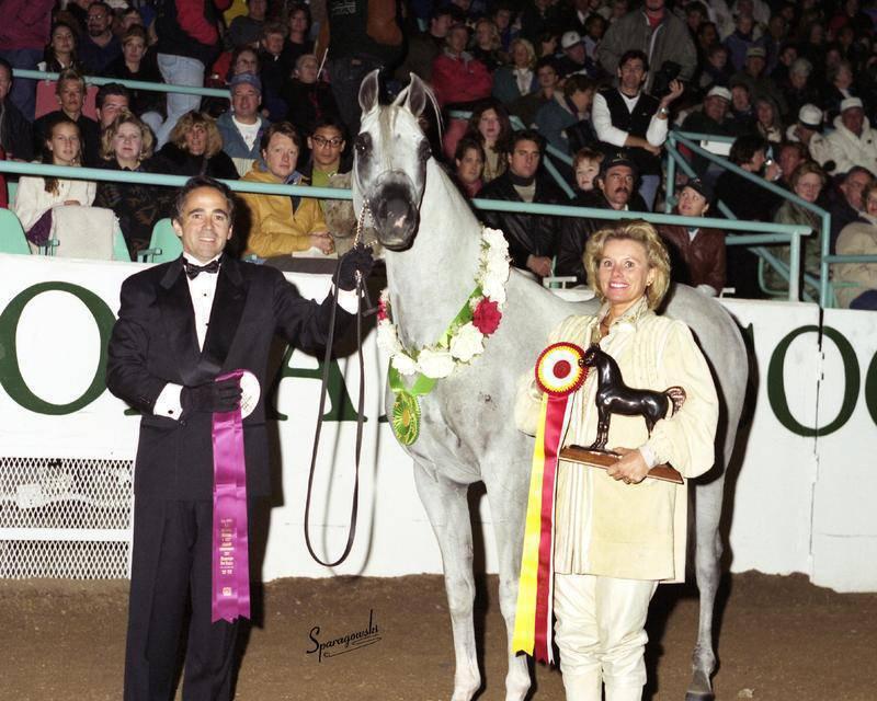 1997 US Reserve National Champion Stallion