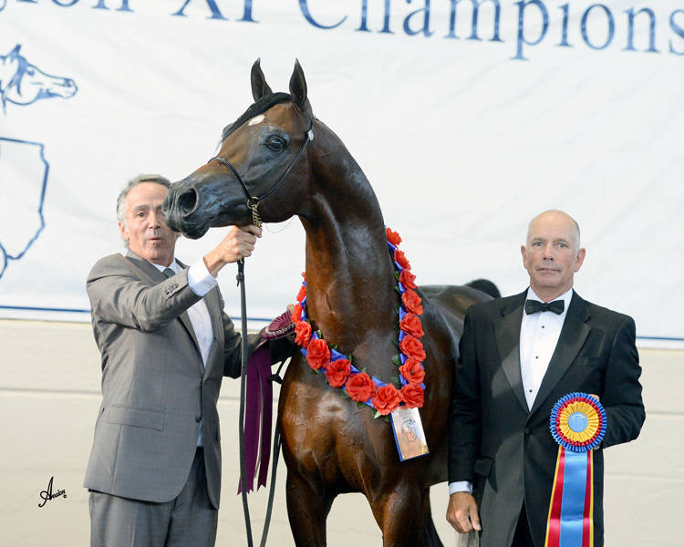 Region 11 Champion Stallion