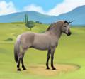 fjord unicorns