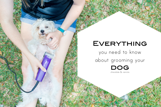 Grooming Your Dog at Home | chocolateandcarrots.com