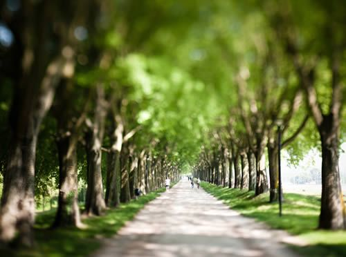 Path Through Trees Photo, Wealth Management Company - Zhang Financial