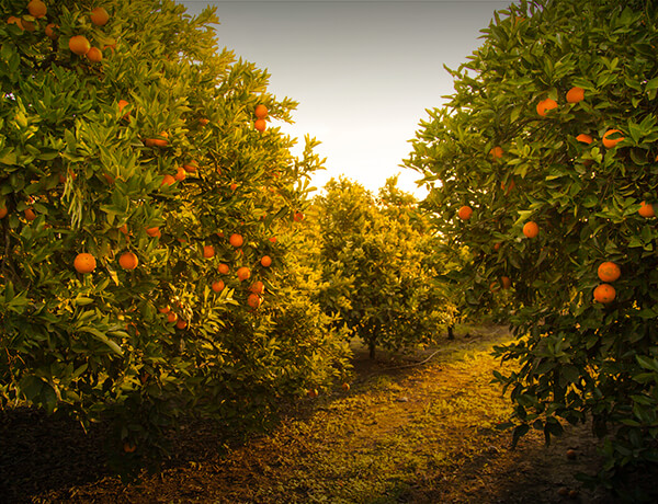 Taxable vs. Tax-Deferred Savings