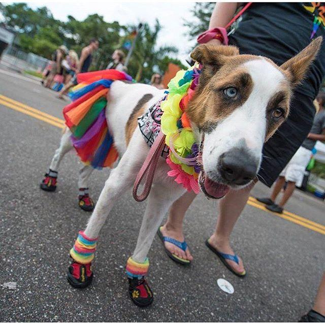 Two eyes, two colors!  An adorable #cleargram caught by @lervasaur last weekend during the pride parade in StPete. . . Hey friends, @jkhokhar1 here and hope you're ready to seize the day!