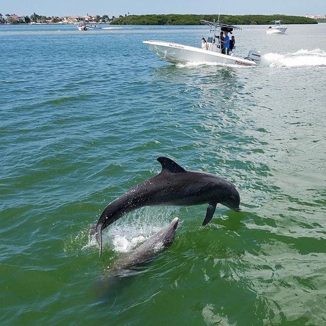 #dolphins playing by our boat! #HubbardsMarina has been dolphin watching since 1928, come try the ORIGINAL we even guarantee dolphin sightings! #JohnsPass #MadeiraBeach #Florida