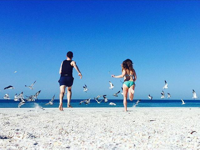 Gull-f Coast. #stpete #stpetebeach #gullgetters @danflemingdesign