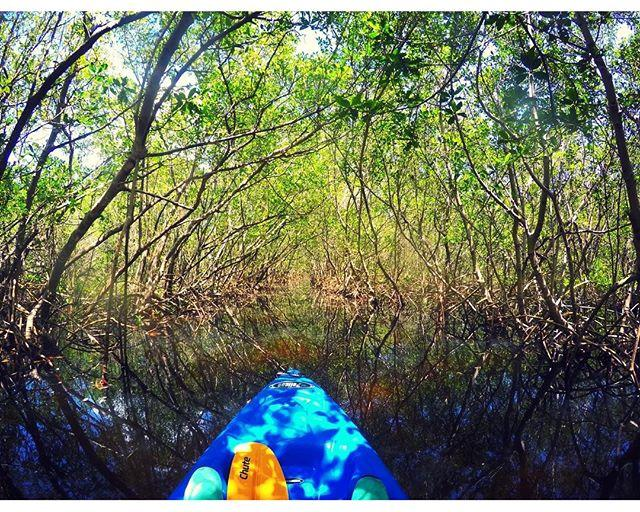 Florida scenery is absolutely incredible. Around every corner is another adventure waiting to happen. Explore you're area and love it! 🚣🏻 . . #ilovetheburg #igersstpete #kayaking #florida #liveamplified #vspc #nature #stpetersburg #tampabay #explorida #cleargram #clearwater #mangrove #weedonislandpreserve #yakkin #pelican #floridalife #flstateofmind #getoutside #inthewild #naturelovers #thegreatoutdoors #soflo