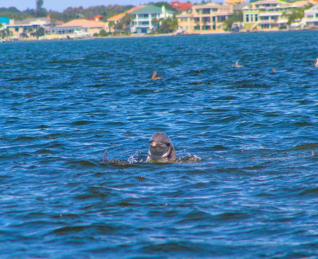 #GoodMorning to you. Awesome #Dolphin pic taken near St. Pete Beach by Shayna Midulla. #WFLA https://t.co/nX4nXf73QR