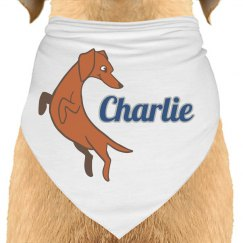 Charlie the Doxie