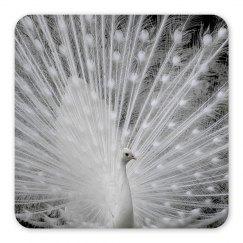 White Peacock Magnet