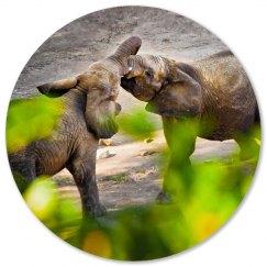 Baby elephants Coasters
