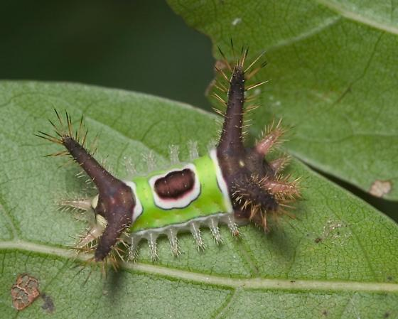 Be Careful With Fuzzy And Hairy Caterpillars Blogs